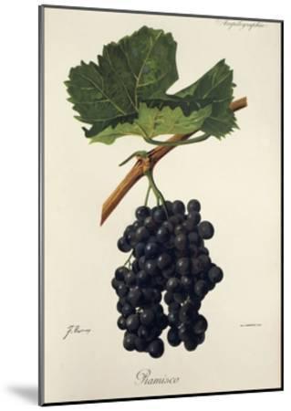 Ramisco Grape-J. Troncy-Mounted Giclee Print