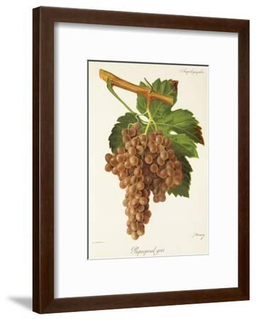 Piquepoul Gris Grape-J. Troncy-Framed Giclee Print