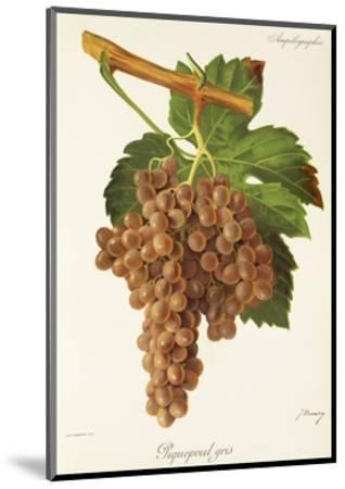 Piquepoul Gris Grape-J. Troncy-Mounted Giclee Print
