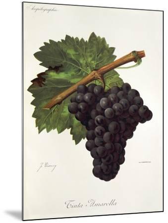Tinto Amarella Grape-J. Troncy-Mounted Giclee Print
