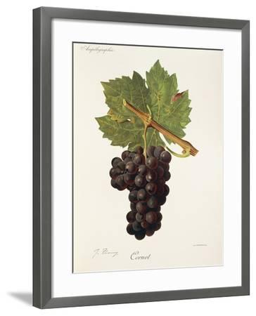 Cornet Grape-J. Troncy-Framed Giclee Print