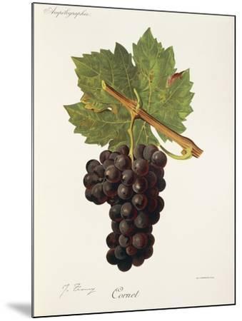 Cornet Grape-J. Troncy-Mounted Giclee Print
