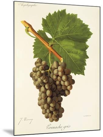 Grenache Gris Grape-J. Troncy-Mounted Giclee Print