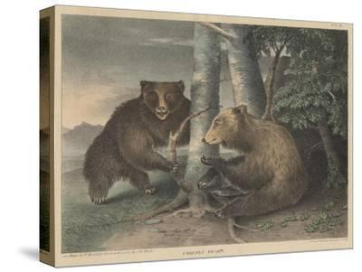 Grizzly Bears-J. R. Peale-Stretched Canvas Print