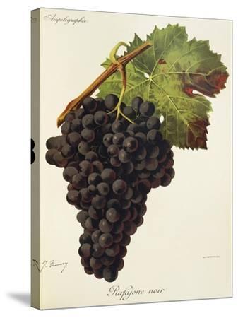 Rafajone Noir Grape-J. Troncy-Stretched Canvas Print
