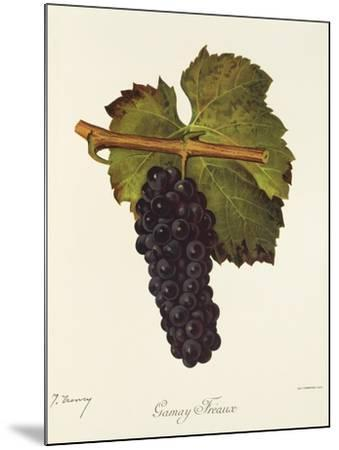 Gamay Freaux Grape-J. Troncy-Mounted Giclee Print