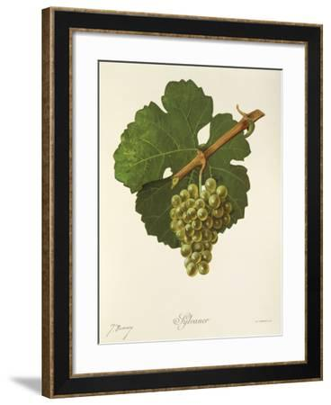 Sylvaner Grape-J. Troncy-Framed Giclee Print