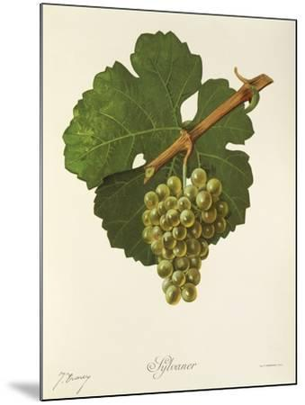 Sylvaner Grape-J. Troncy-Mounted Giclee Print