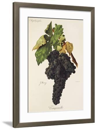 Tempranillo Grape-J. Troncy-Framed Giclee Print