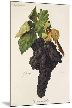 Tempranillo Grape-J. Troncy-Mounted Giclee Print