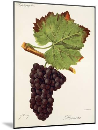 Mourac Grape-J. Troncy-Mounted Giclee Print