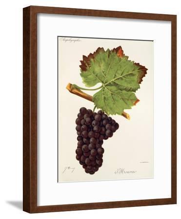 Mourac Grape-J. Troncy-Framed Giclee Print