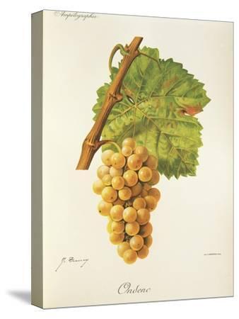 Ondenc Grape-J. Troncy-Stretched Canvas Print
