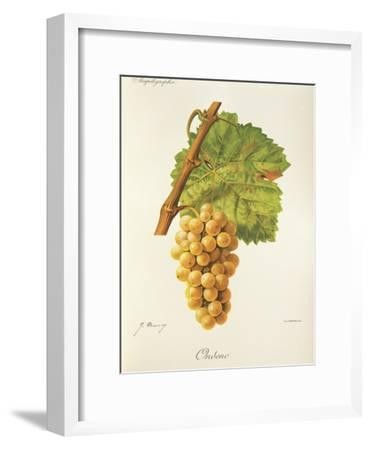 Ondenc Grape-J. Troncy-Framed Giclee Print