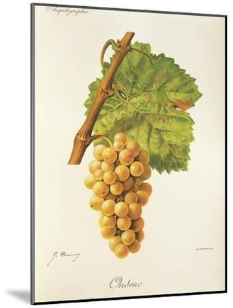 Ondenc Grape-J. Troncy-Mounted Giclee Print