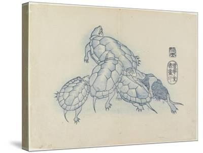 Turtles, C. 1830- Hogyoku-Stretched Canvas Print