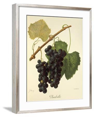 Isabelle Grape-J. Troncy-Framed Giclee Print