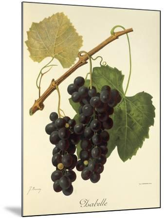 Isabelle Grape-J. Troncy-Mounted Giclee Print
