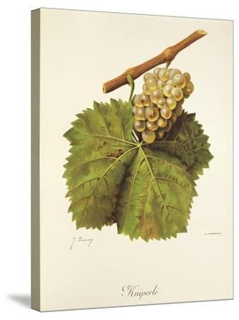 Kniperle Grape-J. Troncy-Stretched Canvas Print