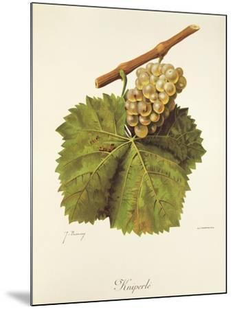 Kniperle Grape-J. Troncy-Mounted Giclee Print