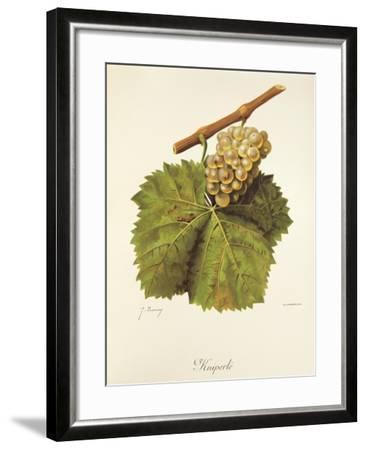 Kniperle Grape-J. Troncy-Framed Giclee Print