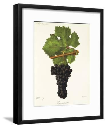 Carmenere Grape-J. Troncy-Framed Giclee Print