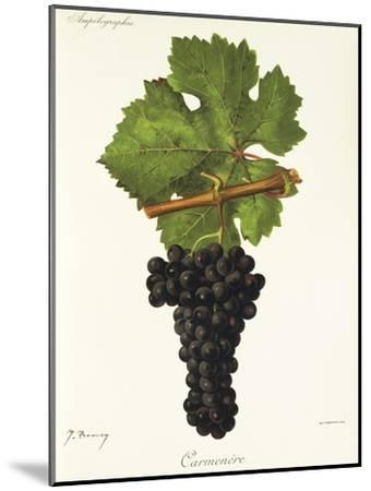 Carmenere Grape-J. Troncy-Mounted Giclee Print