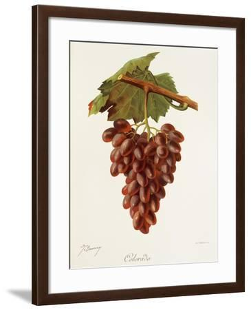 Colourada Grape-J. Troncy-Framed Giclee Print