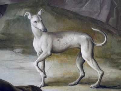 Dog-Jacopo Guarana-Stretched Canvas Print