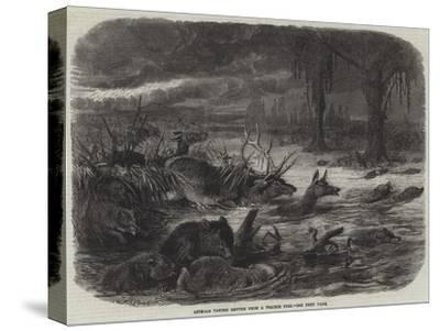 Animals Taking Refuge from a Prairie Fire-Johann Baptist Zwecker-Stretched Canvas Print
