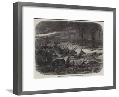 Animals Taking Refuge from a Prairie Fire-Johann Baptist Zwecker-Framed Giclee Print