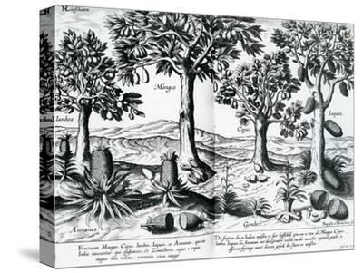 Tropical Fruit Trees, 1596-Johannes Baptista van Frueauf the Younger-Stretched Canvas Print