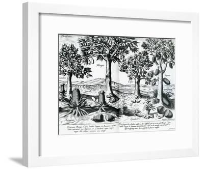 Tropical Fruit Trees, 1596-Johannes Baptista van Frueauf the Younger-Framed Giclee Print