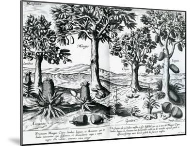Tropical Fruit Trees, 1596-Johannes Baptista van Frueauf the Younger-Mounted Giclee Print