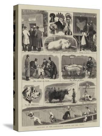 Sketches at the Birmingham Cattle and Dog Shows-John Charles Dollman-Stretched Canvas Print
