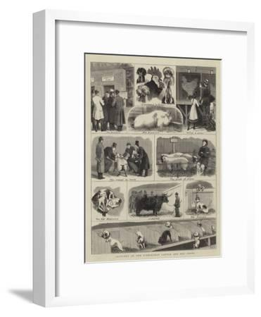 Sketches at the Birmingham Cattle and Dog Shows-John Charles Dollman-Framed Giclee Print