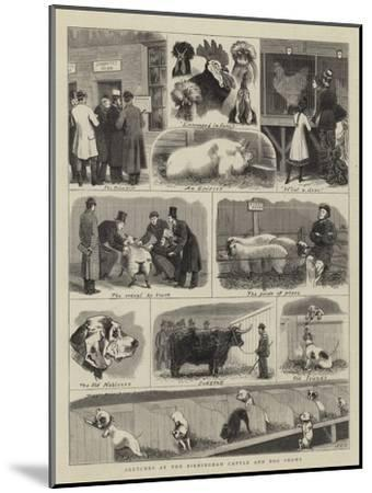 Sketches at the Birmingham Cattle and Dog Shows-John Charles Dollman-Mounted Giclee Print