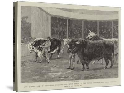 The Queen's Sale of Shorthorn, Hereford and Devon Cattle at the Prince Consort's Shaw Farm, Windsor-John Charles Dollman-Stretched Canvas Print
