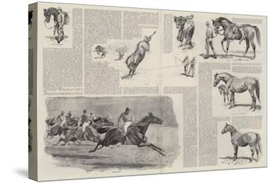 The Career of a Racehorse-John Charlton-Stretched Canvas Print