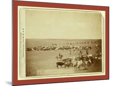 Round-Up Scenes on Belle Fouche [Sic] in 1887-John C. H. Grabill-Mounted Giclee Print