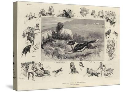 Sheep-Dog Trials in Westmoreland-John Charlton-Stretched Canvas Print