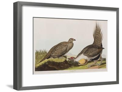 Illustration from 'Birds of America', 1827-38 (Hand-Coloured and Aquatint)-John James Audubon-Framed Giclee Print