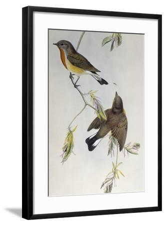 Red-Breasted Flycatcher (Ficedula Parva)-John Gould-Framed Giclee Print