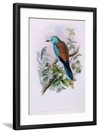 European Roller; Coracias Garrula, 1862-1873 (Hand-Finished Colour Lithograph)-John Gould-Framed Giclee Print