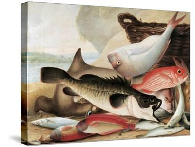 Fish Catch and Dawes Point, Sydney Harbour, C.1813-John William Lewin-Stretched Canvas Print