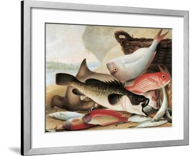 Fish Catch and Dawes Point, Sydney Harbour, C.1813-John William Lewin-Framed Giclee Print