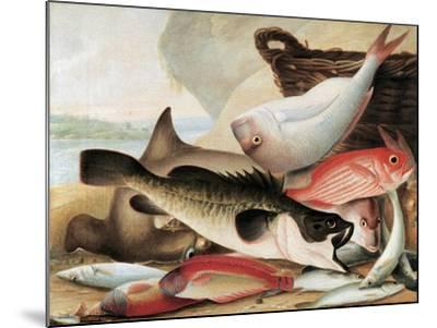 Fish Catch and Dawes Point, Sydney Harbour, C.1813-John William Lewin-Mounted Giclee Print