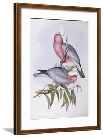 Violet-Necked Lory (Eos Squamata)-John Gould-Framed Giclee Print