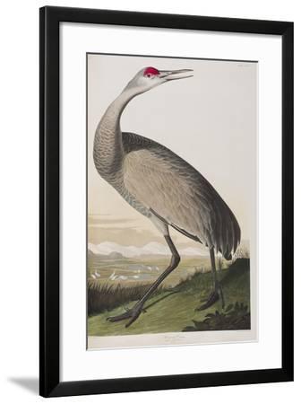 Illustration from 'Birds of America', 1827-38 (Hand-Coloured and Aquatint)-John James Audubon-Framed Giclee Print