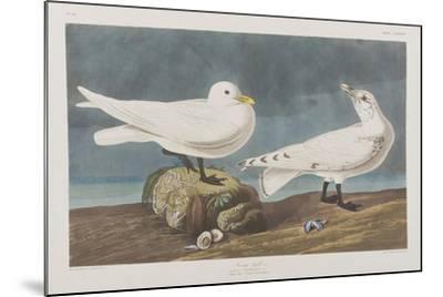Illustration from 'Birds of America', 1827-38 (Hand-Coloured and Aquatint)-John James Audubon-Mounted Giclee Print
